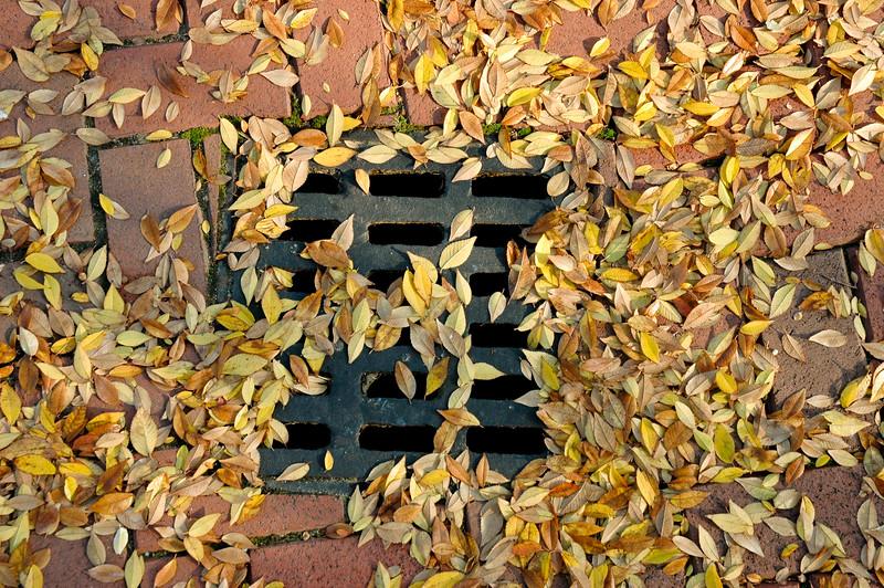 Fall At the Drain