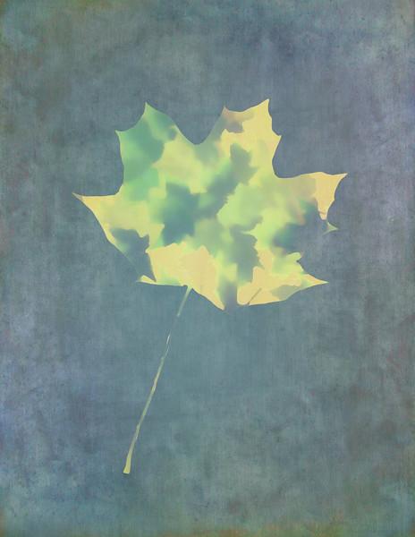 Leaves Through Maple Leaf On Texture 3