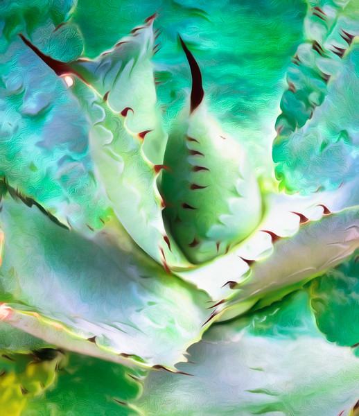 Black Tipped Cactus Abstract