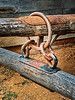 Antique Wagon Mule Hitch Assembly