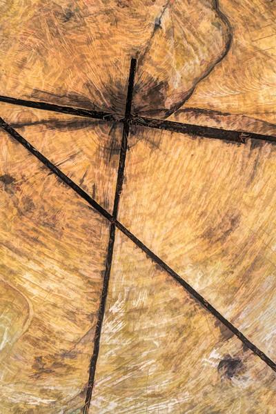 Crossroads On The Tree Trunk