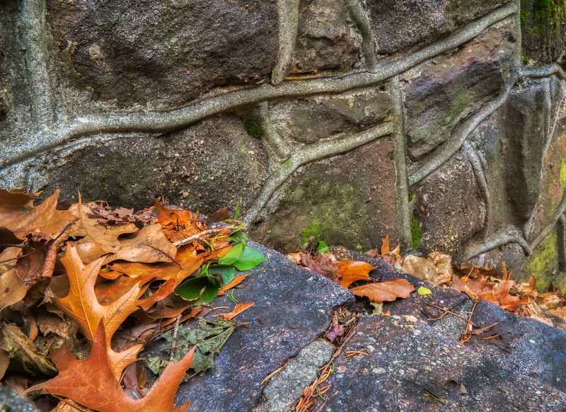 Leaves Along The Stone Wall