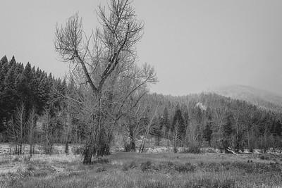 Snowy Fall Adams Gulch, Sun Valley, Idaho