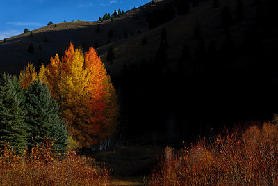 Fall Evening Sun Valley, Idaho