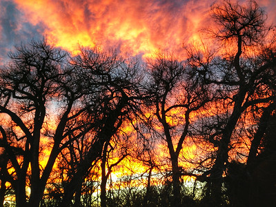 Cottonwood Sunset