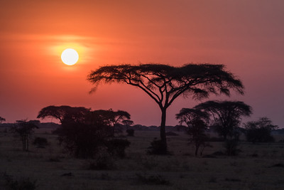Tanzania_Safari-best-103