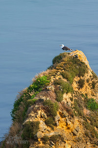 Seagull Pointe du Hoc 3, Normandy, France