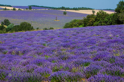 Lavender Field Landscape, Provence
