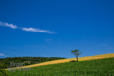 Single Tree in Wheat Field France
