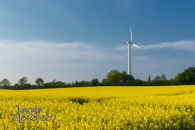 Windmill in Field of Raps, Germany