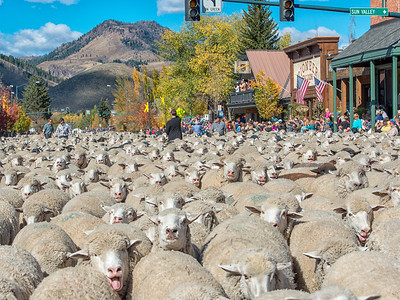 Trailing of the Sheep Festival - 2014