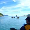 Aialik Bay, Alaska, Kayak Adventure