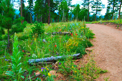 Colorado Wildflower Path, Staunton State Park, Colorado