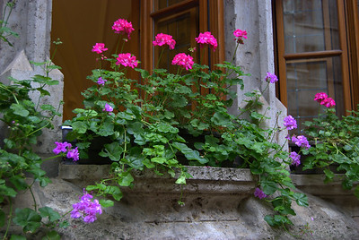 Window Box Still Life, Munich, Germany