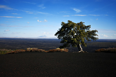 Solo Tree on Inferno Cone, Craters of the Moon National Monument
