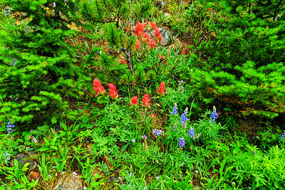 Wildflowers along the Trail, Montana