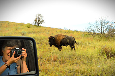 Selfie with a Bison, Theodore National Park, North Dakota