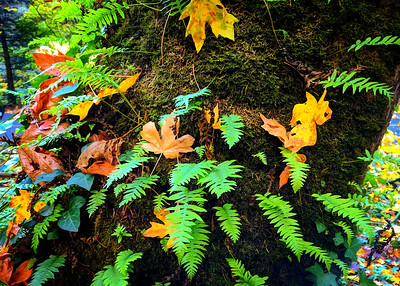 Autumn Still Life, Hoyt Arboretum, Portland, Oregon