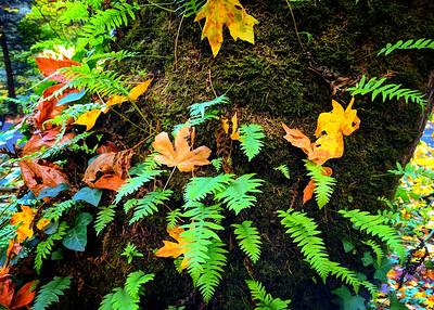 Autumn Still Life, Hoyt Arboretum, Portland, Oregon