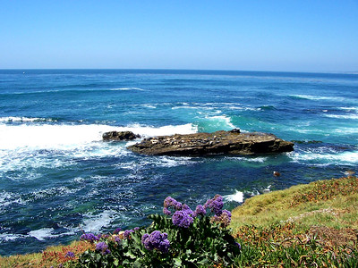 Pacific Coast with Perez Sea Lavendar and Harbor Seals