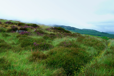 Stromemeanach, Beautiful and lush!