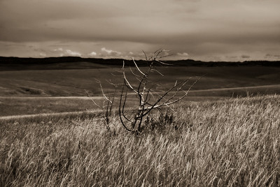Dead Shrub, Little Bighorn Battlefield National Monument