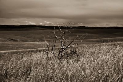Dead Shrub, Little Bighorn Battlefield National Monument