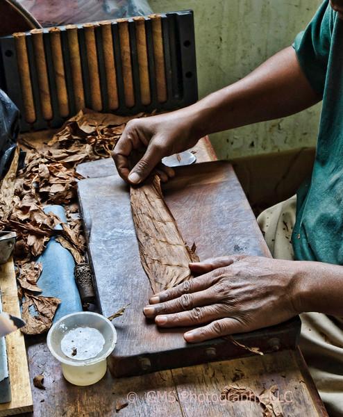 Experienced hands create cigars at Gracliff cigar factory in Nassau, Bahamas