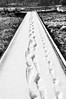 Two pairs of footprints appear along freshly fallen snow on the footbridge at Cheesequake State Park in Old Bridge, New Jersey.