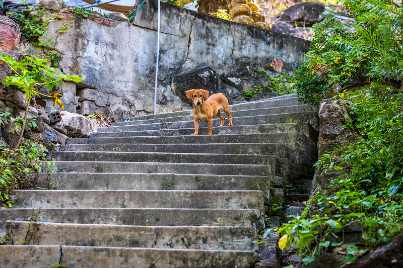 Pup on the stairs