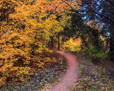 A stroll down a path in fall