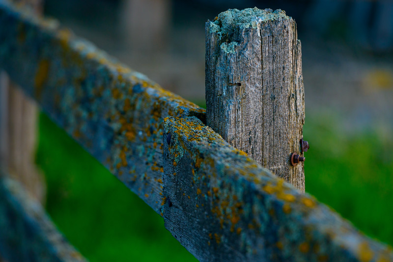 Mossy Fence at Sunset