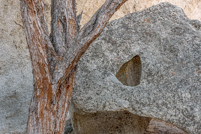 Rock and Tree, City of Rocks, Idaho
