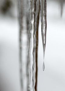 February Icicles