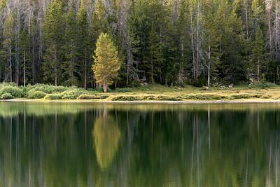 Pine on the Water, Chamberlain Basin