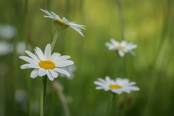 RME_Kenny's_Meadow_2016-0520_188