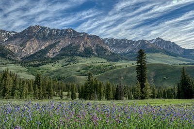 Boulder Mountains and Idaho Bluebells