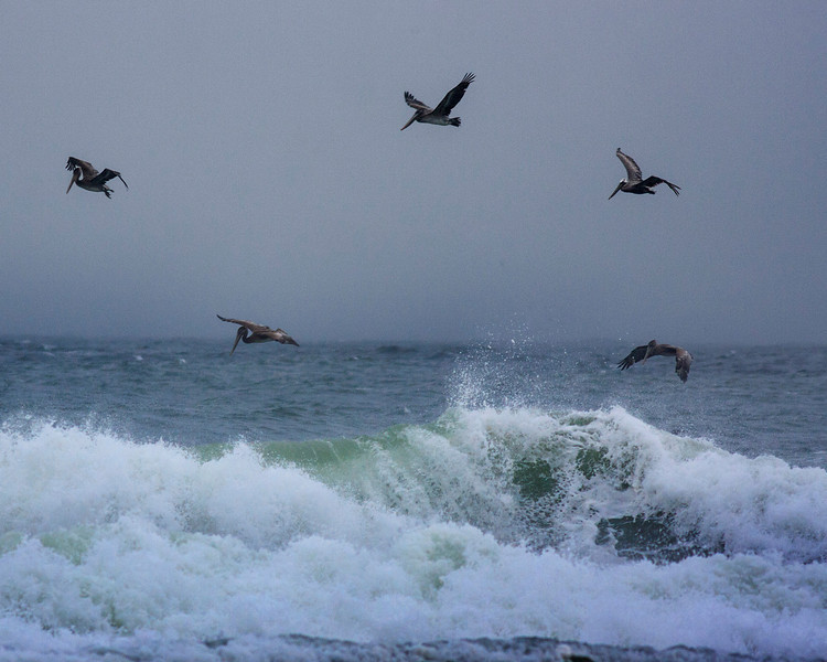 Pelicans flying over waves at Neskowin Beach, Oregon. Oct 19, 2012.