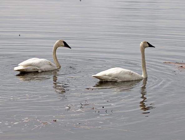 Swan Lake along US20, Idaho
