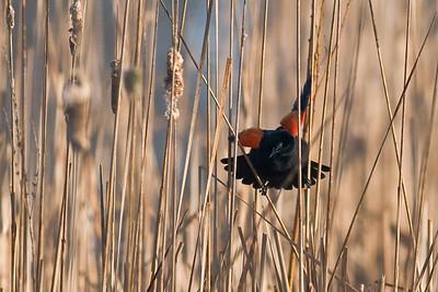Birds-119