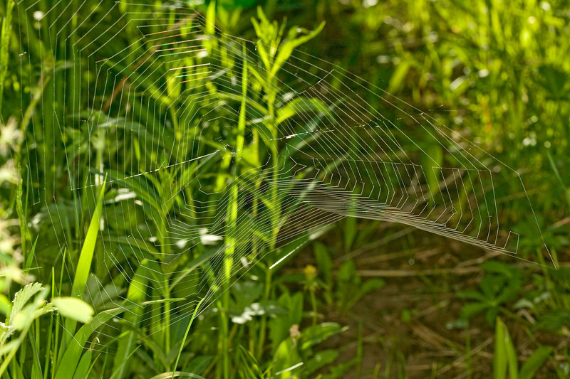 Spider web with unique angles on trail along Red Rock Road in Island Park, Idaho. June 26, 2008