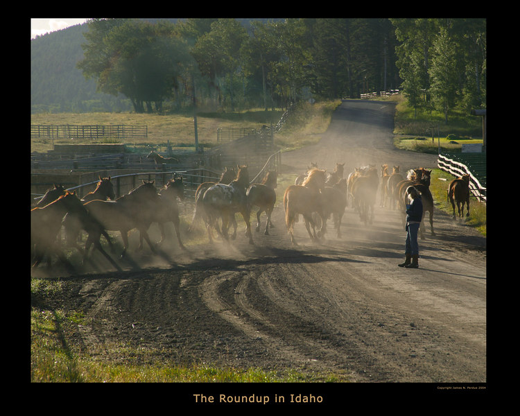 Horses being moved from pasture, Dude Ranch, ID