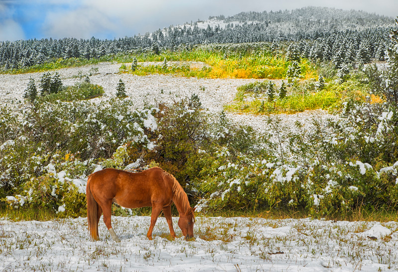 Horse along Red Rock Road