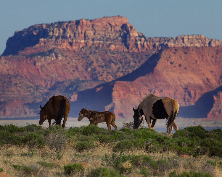 Vermillion Cliffs in Utah from a horse pasture in Arizona. May 1, 2013