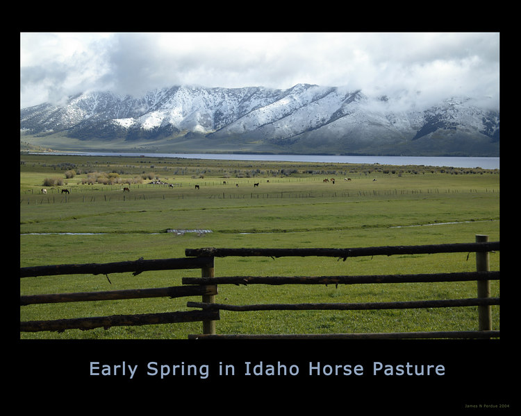 Horses grazing afar in Idaho pasture near Henry's Lake, ID