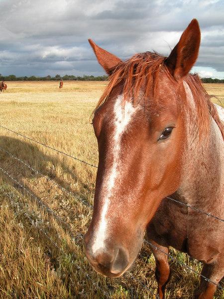 Horse in Montana field