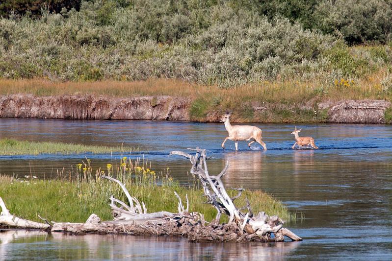 DeersCrossingMadison_170902