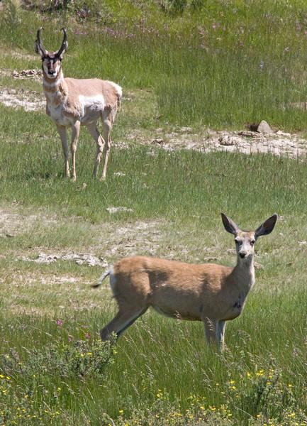 DeerAndAntelope_097828