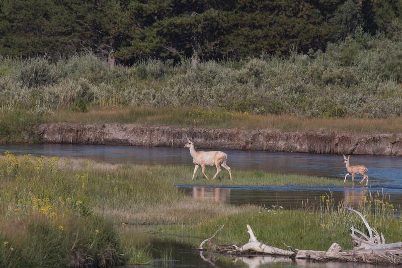 DeersCrossingMadison_170907