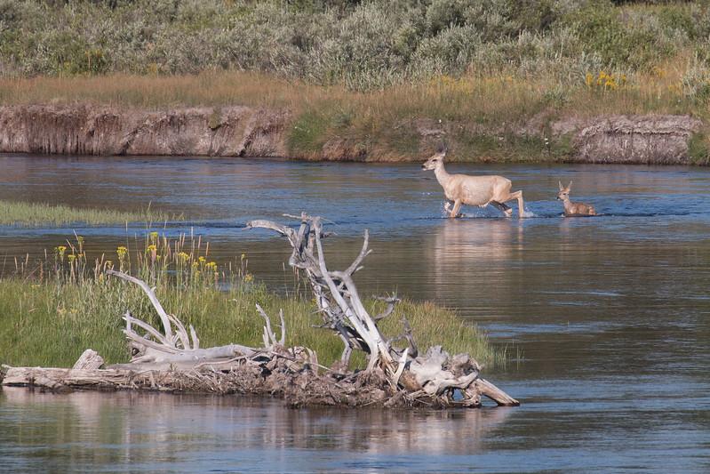 DeersCrossingMadison_170901
